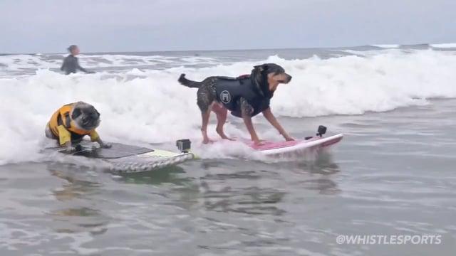 Abbie Surfs